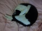 末姫猫ボール