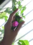 ラディッシュの花